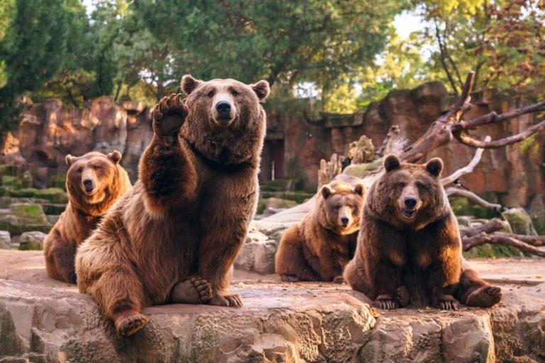 «Медведи» захватили власть на рынках