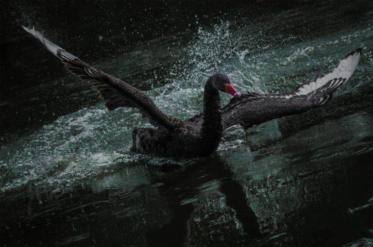 «Черный лебедь» долетел и до российского рынка