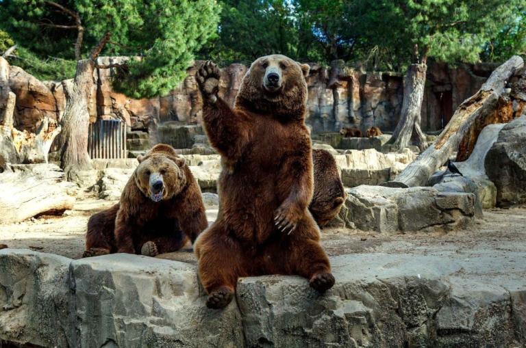 """Индексы вступили на """"медвежью"""" территорию. Смогут ли фискальные и монетарные стимулы возобновить рост рынков?"""